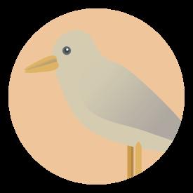 birdicon
